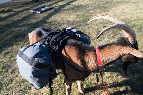 Pack Goat Soft Saddle