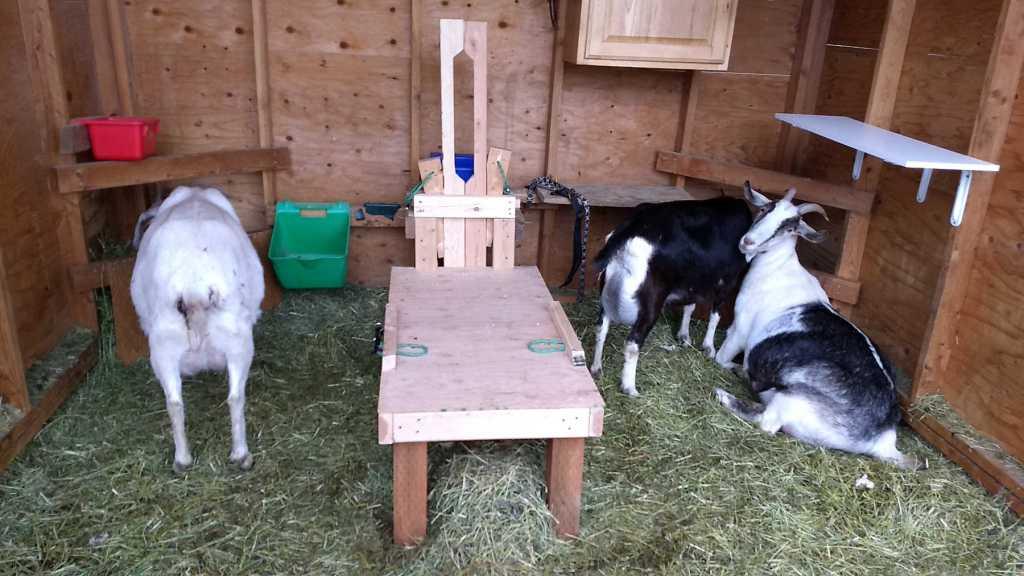 Goat Stanchion