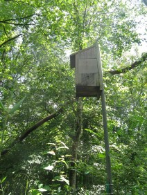 Bird house that turned out to be a hornet house