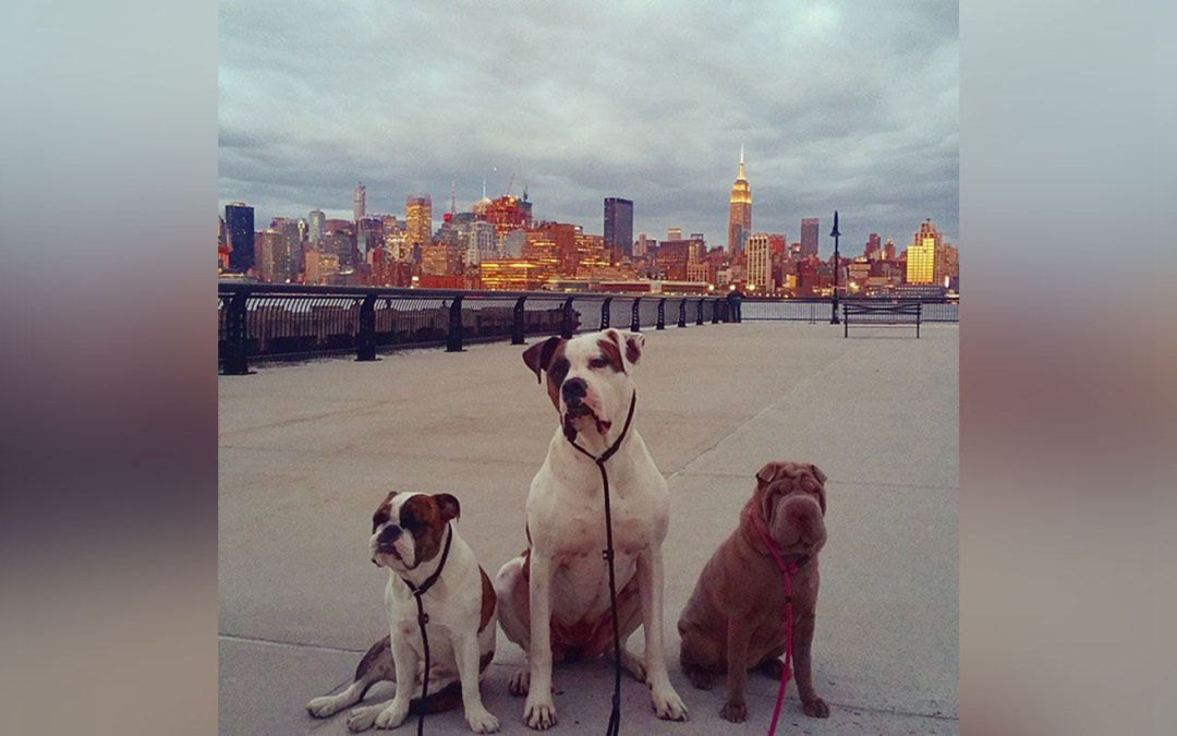 Pack Leader Dogs Testimonials
