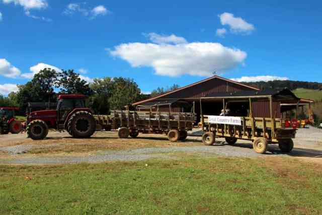 Great Country Farms Bluemont, Virginia tractor to go apple picking and pumpkin picking