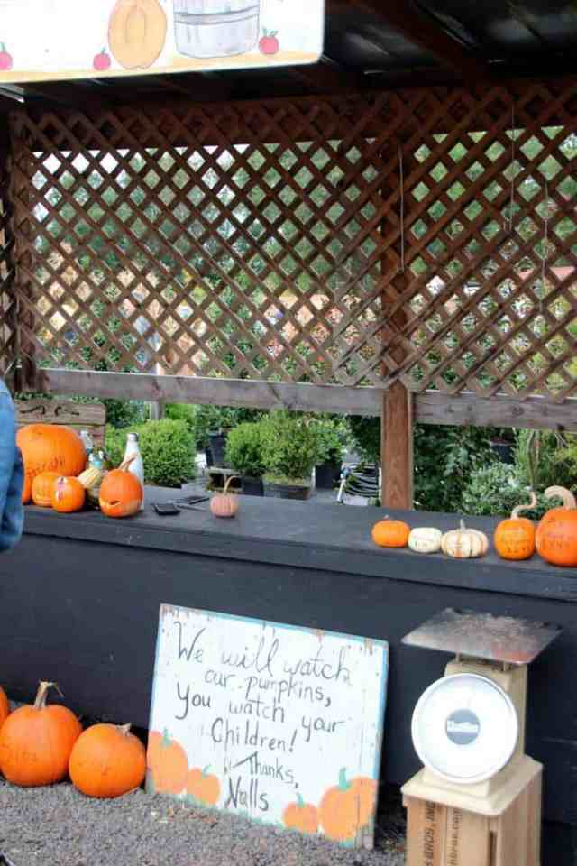 Nalls Produce weigh your pumpkins
