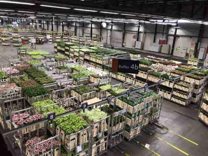 Aalsmeer Flower market Amsterdam Netherlands