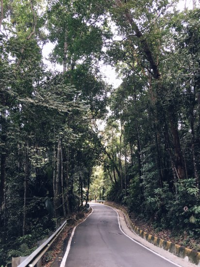 Somewhere along the hike up Penang Hill