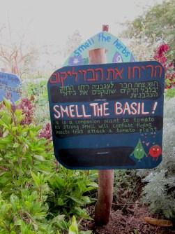 Tips on growing basil & tomatoes!