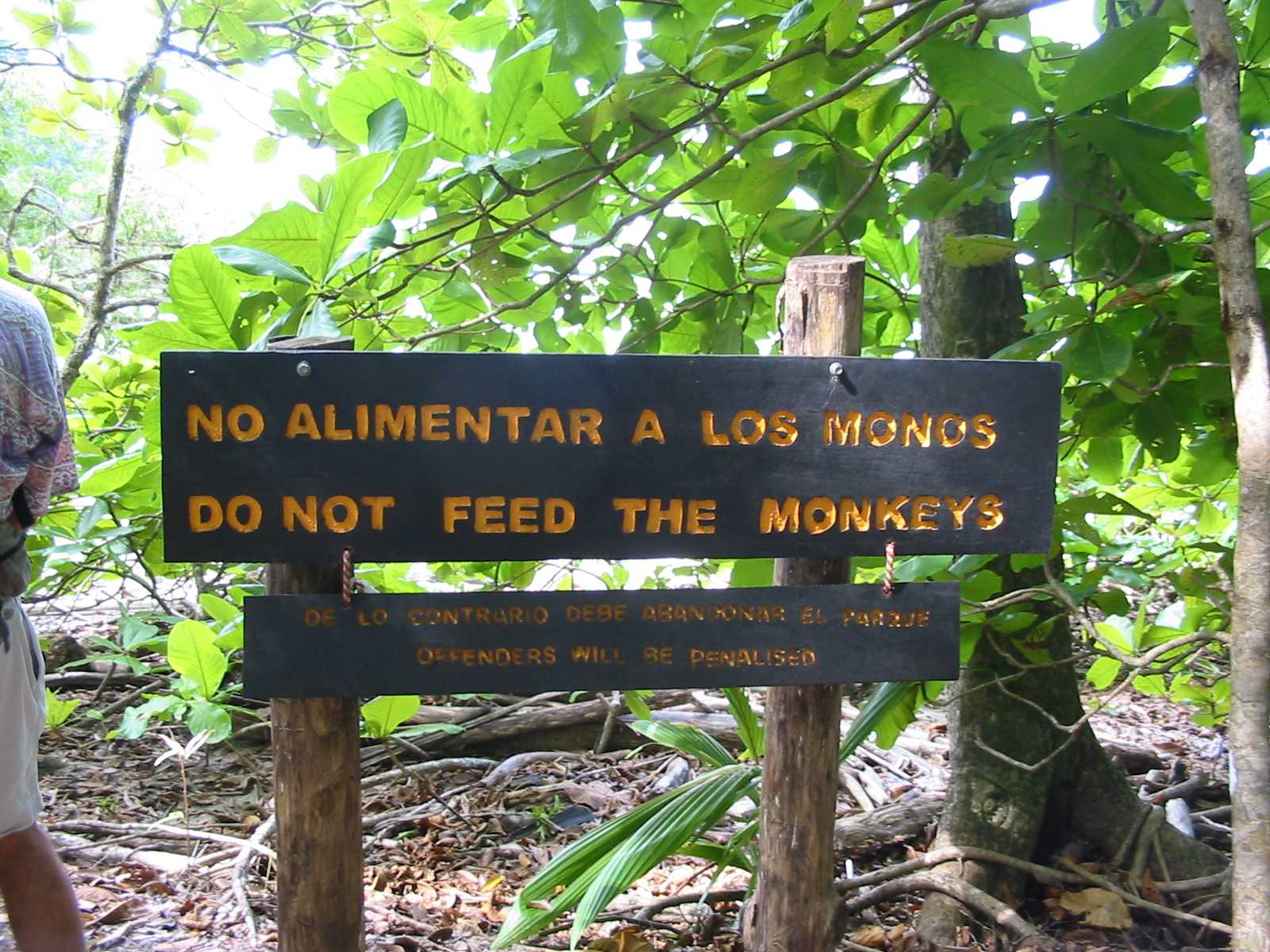 do-not-feed-the-monkeys