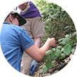 Scouts identifying plants