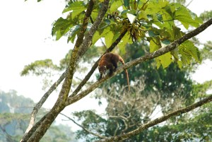 Wildlife in Costa Rica