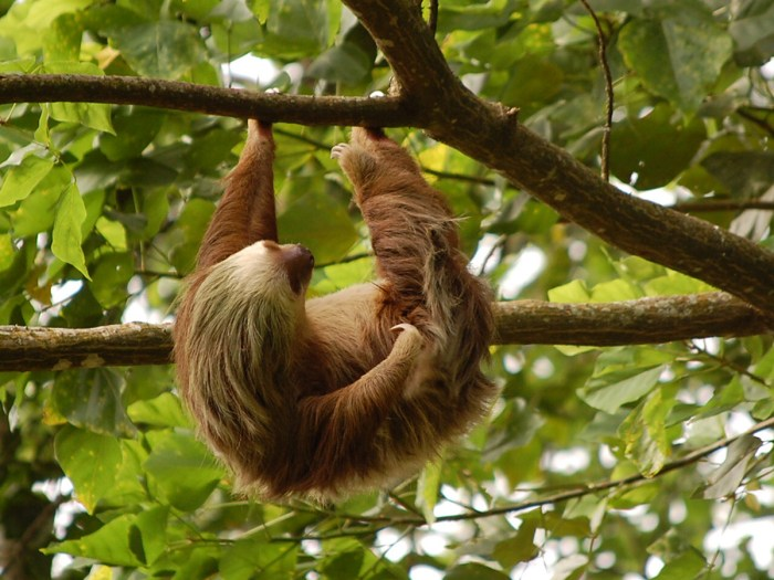 Family friendly activities in Costa Rica
