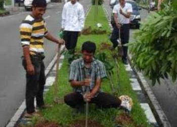 Penyisipan pohon pelindung yang rusak di Agam. (fajar)