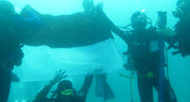 Pengibaran bendera Merah Putih di dasar laut Pulau Awera Mentawai dalam rangka HUT RI ke 71. (ers)
