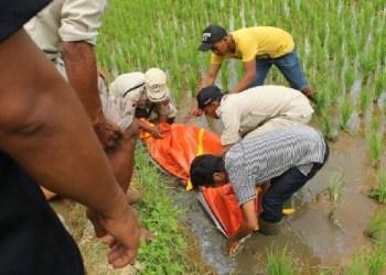 Mayat seorang kakek saat dievakuasi dari sawah di Kab.Agam, Rabu (22/3). (fajar)