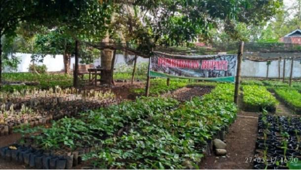 Kebun bibit di lingkungan rumah dinas bupati Agam. (fajar)