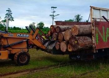 Satpol PP Pessel amankan truk kayu gelondongan, Sabtu (15/12). (rio)