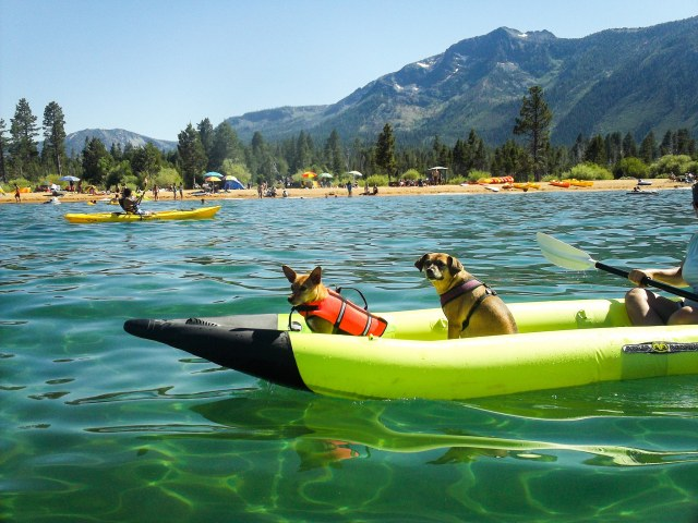 Inflatable Kayaks are still tough enough for dog claws.