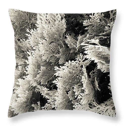 monochrome cypress photograph throw pillow