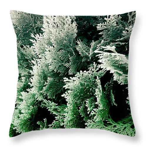 cypress foliage photograph No.5 throw pillow