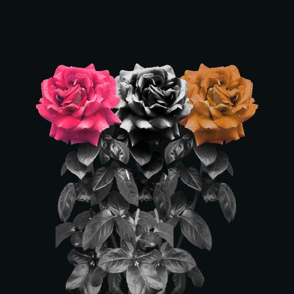 Floral photography 3 surreal roses photomanipulation
