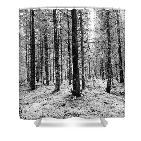 Black and white woods photograph shower curtain