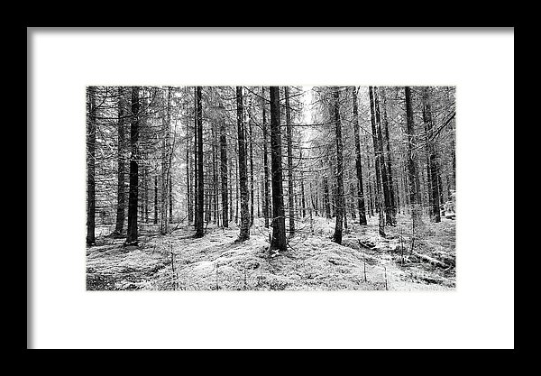 Black and white woods photograph print