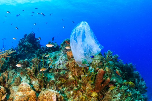 Plastic - Reef - Ocean - Plastic on Reef