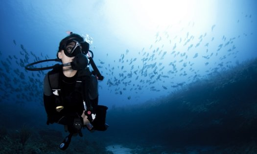 Scuba Diver - Underwater - School of Fish