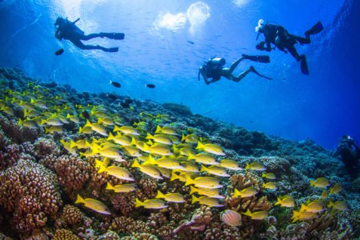 Coral Reef - Scuba Divers - Underwater