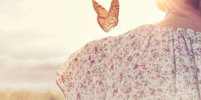 Butterfly Awakens