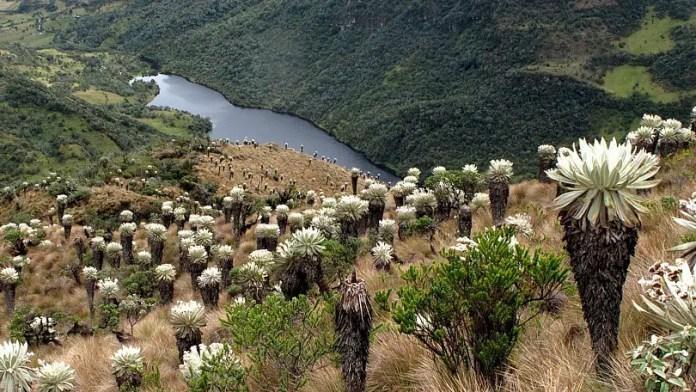 cual es el paramo colombiano considerado como el mas bello del mundo