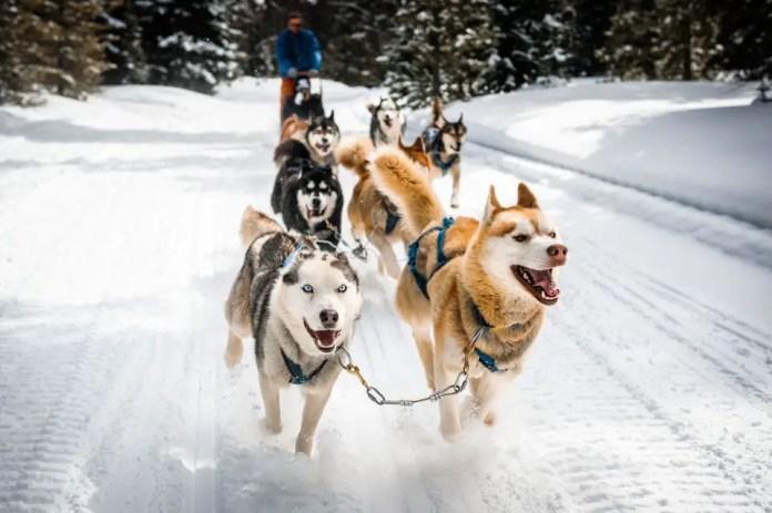 ushuaia invierno
