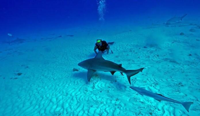 tiburones cancun