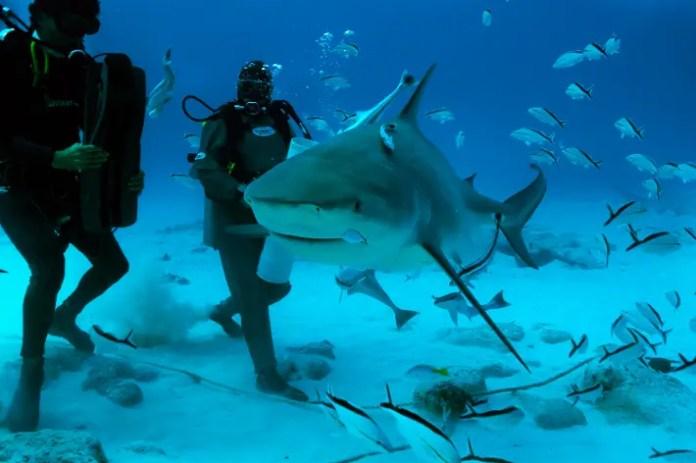 consejos para bucear con tiburones