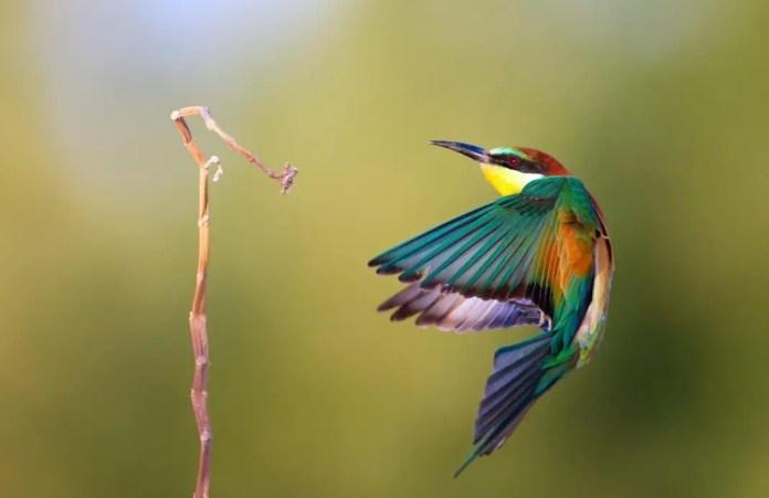 que tipo de movimiento puede identificar en el vuelo de un colibri