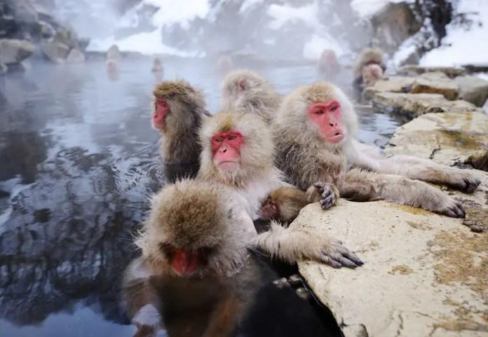 tokio japon lugares turisticos