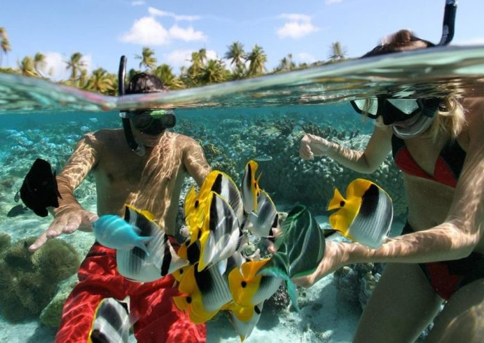 nadar con tiburones en bora bora