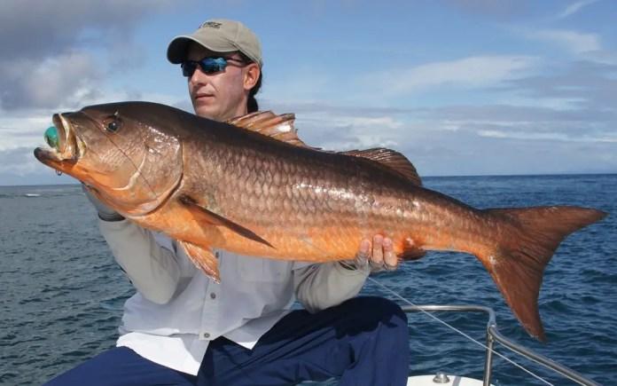temporada de pesca en bahia solano