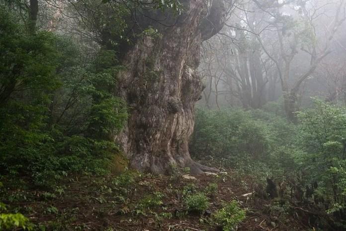 parques nacionales de japón