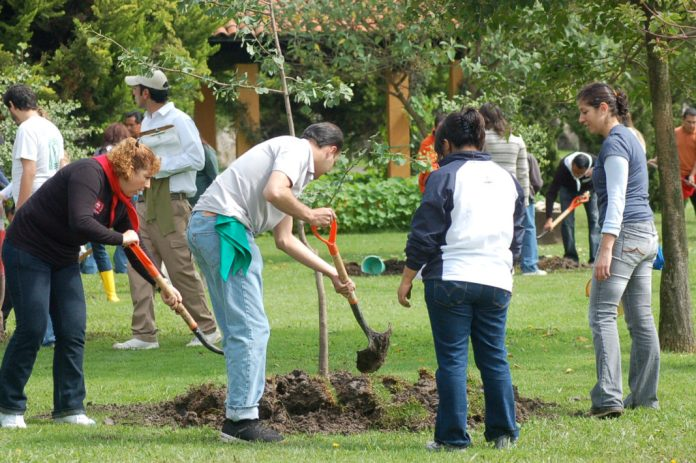 Voluntariado ecologico