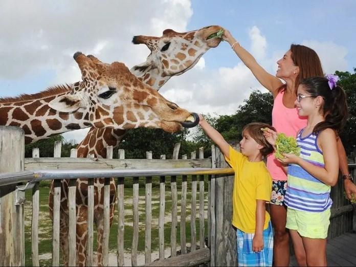 Sitios turísticos en Miami: Zoo de Miami