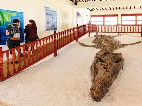 Museo de El Fósil