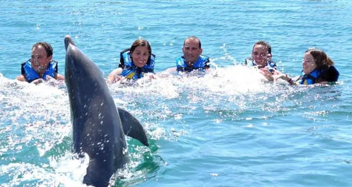 Nadar con delfines en la Riviera Maya