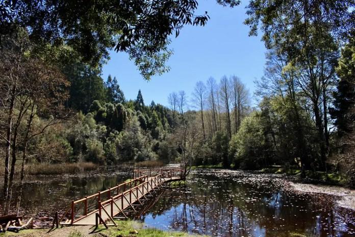 Dónde hospedarse en Valdivia y qué parques visitar