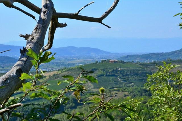 Vista su Villa Beatrice d'este  ©padovaedintorni.it