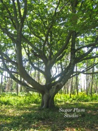 Tree Restoration