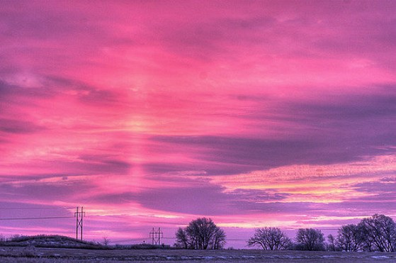crisis pink morning rose advent adviento hope esperanza