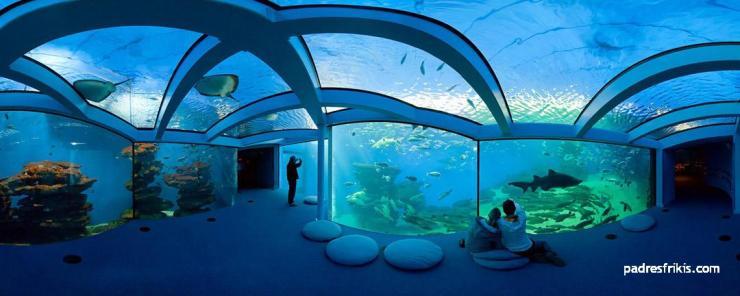 Palma Aquarium visita en familia