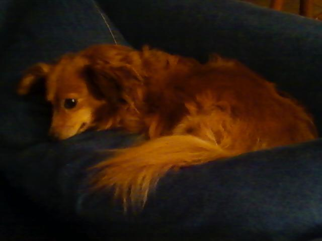 Molly on couch
