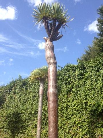 dragontree2