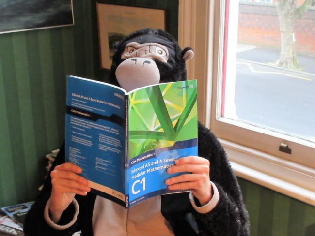 Revision Gorilla