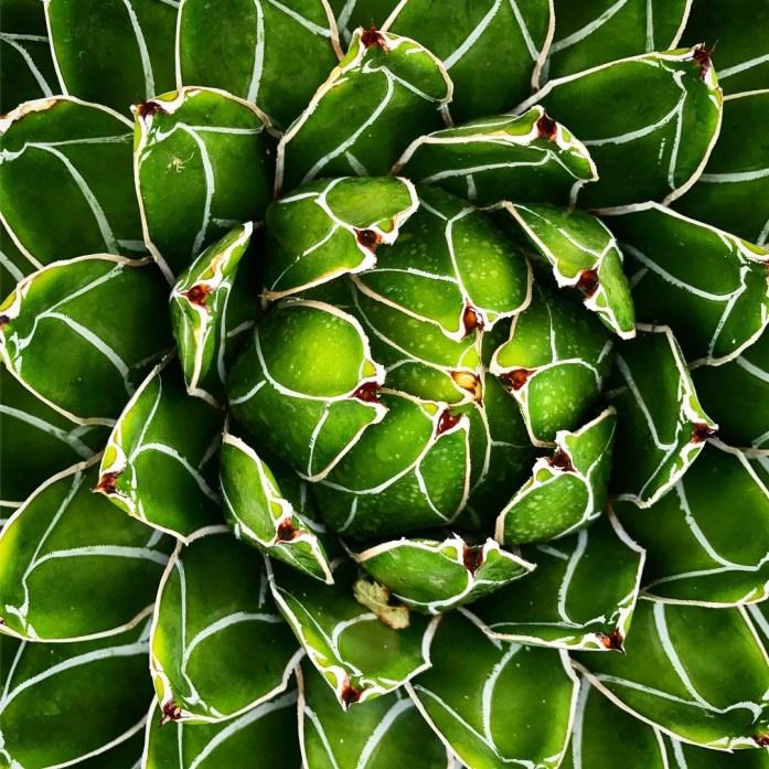 Succulent Up Close